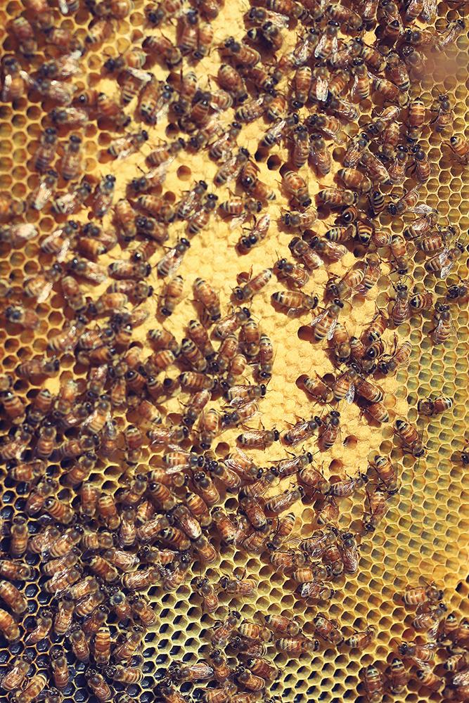 BeeBlog_10b