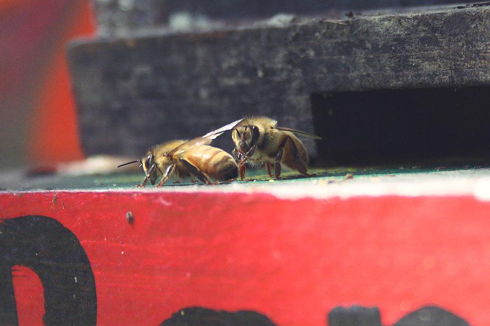 BeeBlog_4